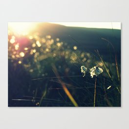 Summer melancholy Canvas Print