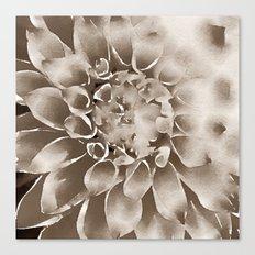 DAHLIE - SEPIA Canvas Print