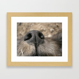 Snout2 Framed Art Print