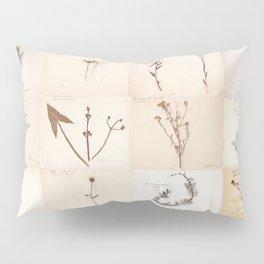 Vintage Herbarium Botanical Collection 1860 Pillow Sham