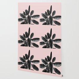 Black Blush Cactus #1 #plant #decor #art #society6 Wallpaper