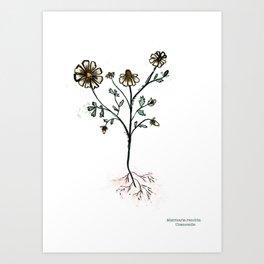 Matricaria recutita Art Print