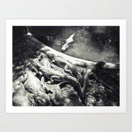 Caimans in a pool Art Print
