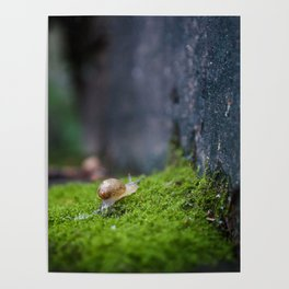 Eli the Snail by Althéa Photo Poster