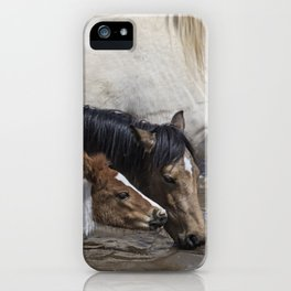 Pinto Foal Enjoying a Dip - South Steens Mustangs iPhone Case
