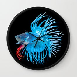Beta fish Wall Clock