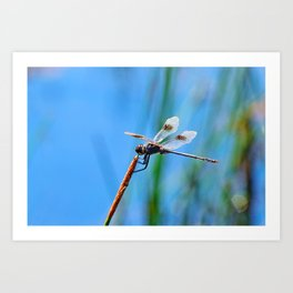 Dragonfly in Blue Art Print