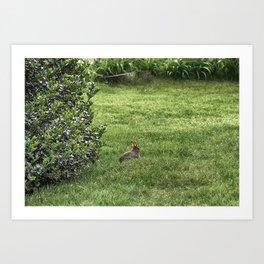 Baby rabbit enjoying sunshine Art Print