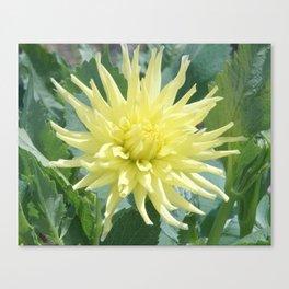 Yellow Surprise Canvas Print