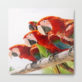 Red macaws Metal Print