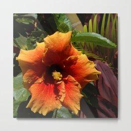 Tropical Orange Hibiscus Flower in Bamboo Garden Metal Print