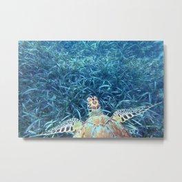 Sea Turtle in the Sea Grass Metal Print