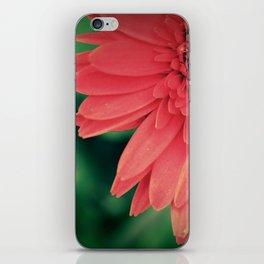 Gerber Daisy. iPhone Skin