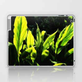 Ginger leaves in the Sun wet with rain Laptop & iPad Skin