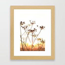 Cow Parsley (Keck) at Sunset Framed Art Print