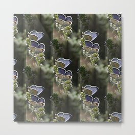 Pairs of butterflies Metal Print