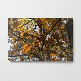 Autumn Leafs Forest Landscape Metal Print