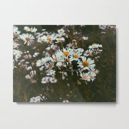 Beetle in the Daisy Weeds Metal Print
