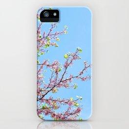 Blossoming Cercis siliquastrum or Judas tree iPhone Case