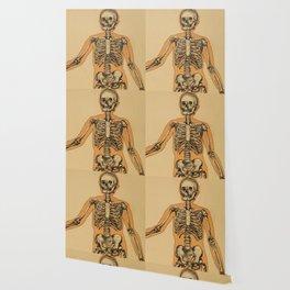 Vintage Human Skeleton Illustration (1887) Wallpaper