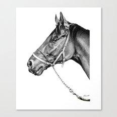 Sir Alfred - Racehorse : Graphite Canvas Print