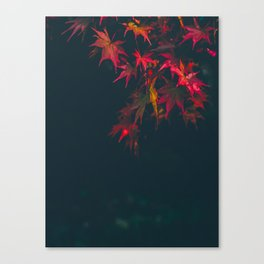 Sensual Red Japanese Maple Canvas Print