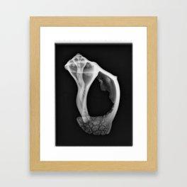 Shell in Section I Framed Art Print
