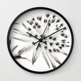 Astrantia Wall Clock