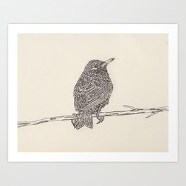 European Starling Art Print