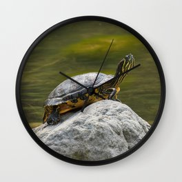 turtle rest on rock at sun on pond Wall Clock