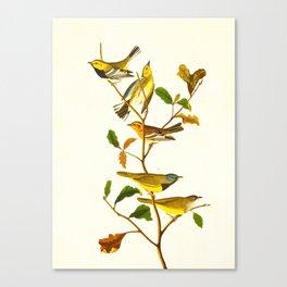 Birds & Plants Canvas Print
