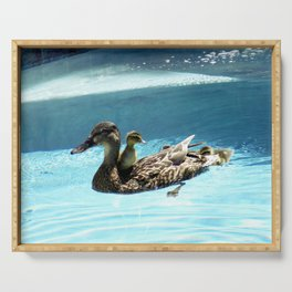 Duck & ducklings swimming in pool Serving Tray