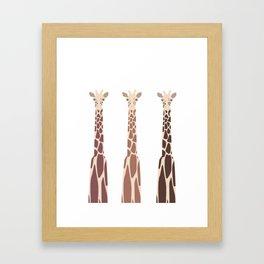 Triple Giraffes Framed Art Print