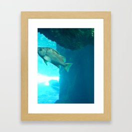 fish in water 1 Framed Art Print