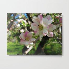Apple Blossom Time Metal Print