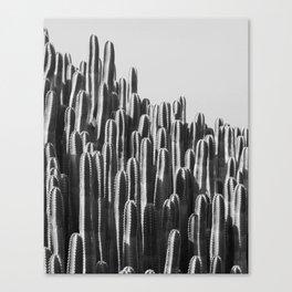 Cactus Landscape Canvas Print