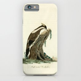 John Latham - A General History of the Birds, Vol 3 (1821) - Plate 59: Buff-Crested Woodpecker iPhone Case