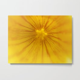 Yellow Magic Star by Mandy Ramsey, Haines, AK Metal Print