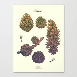 Pine Cones - version 1 Canvas Print