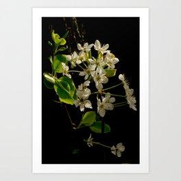 Crabapple Tree Art Print