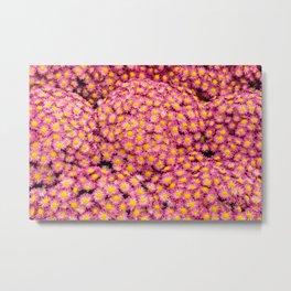 pink marguerite #society6 #decor #buyart Metal Print