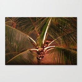 Lazy Coconut Palm  Canvas Print