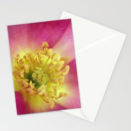 The Last Rose of Summer Stationery Cards