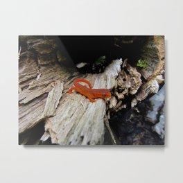 Red Newt Metal Print