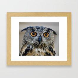 Handsome Eurasian Eagle Owl Framed Art Print