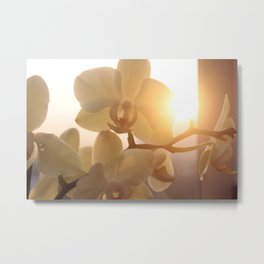 orchids and sun2 Metal Print