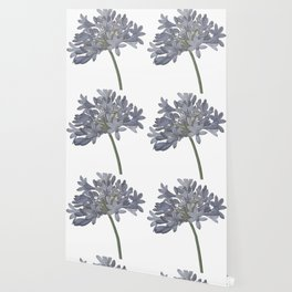 Blue Lily Wallpaper