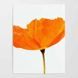 One And Only - Orange Poppy White Background #decor #society6#buyart Poster