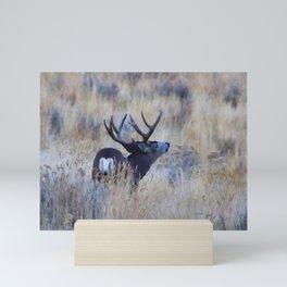 Black Tail Buck Mini Art Print