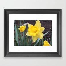 Daffodil Framed Art Print